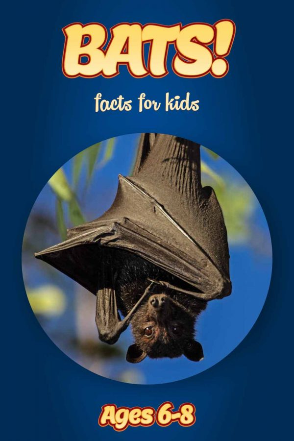 Bat Facts for Kids - Nonfiction Ages 6-8