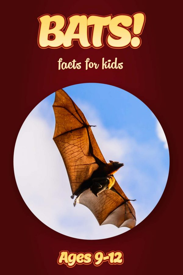 Bat Facts for Kids - Nonfiction Ages 9-12