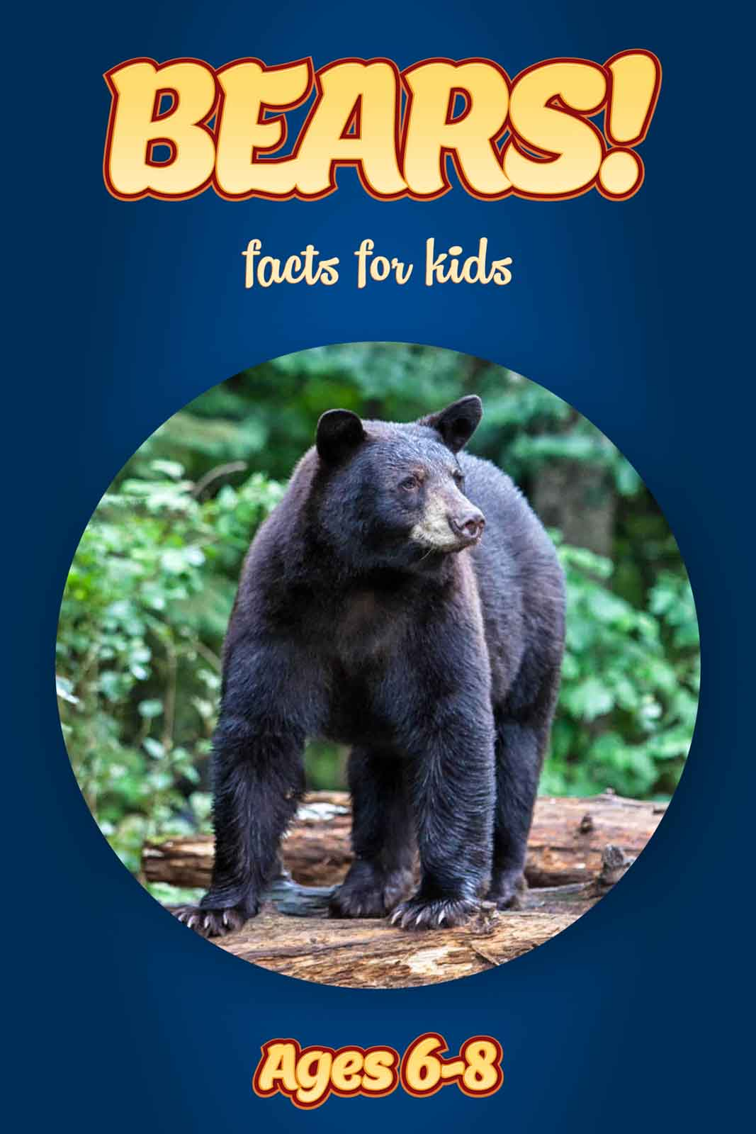bear facts for kids kids nonfiction book clouducated ages 6 8