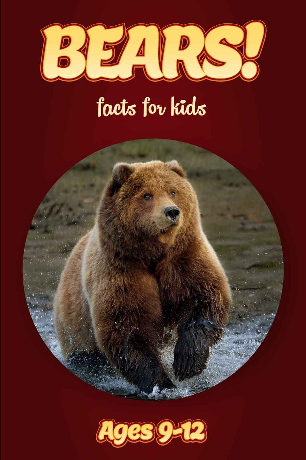 bear facts for kids kids nonfiction book clouducated ages 9 12