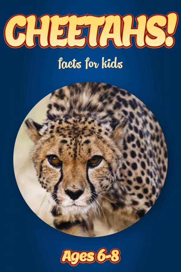 Cheetah Facts for Kids - Nonfiction Ages 3-6