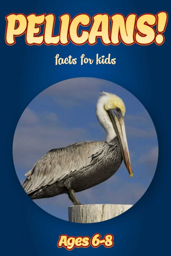 Pelican Facts for Kids - Nonfiction Ages 3-6
