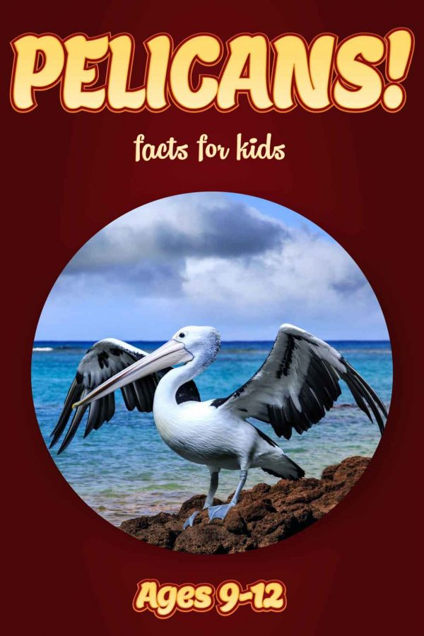 Pelican Facts for Kids - Nonfiction Ages 9-12