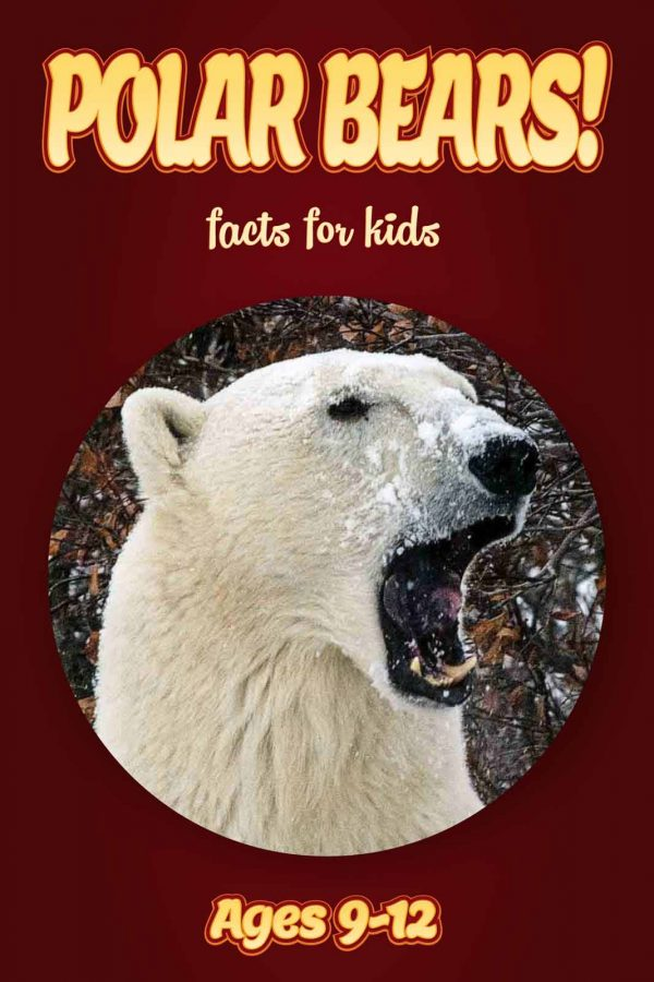 Polar Bear Facts for Kids - Nonfiction Ages 9-12