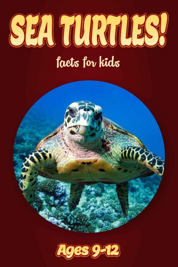 Sea Turtle Facts for Kids - Nonfiction Ages 9-12