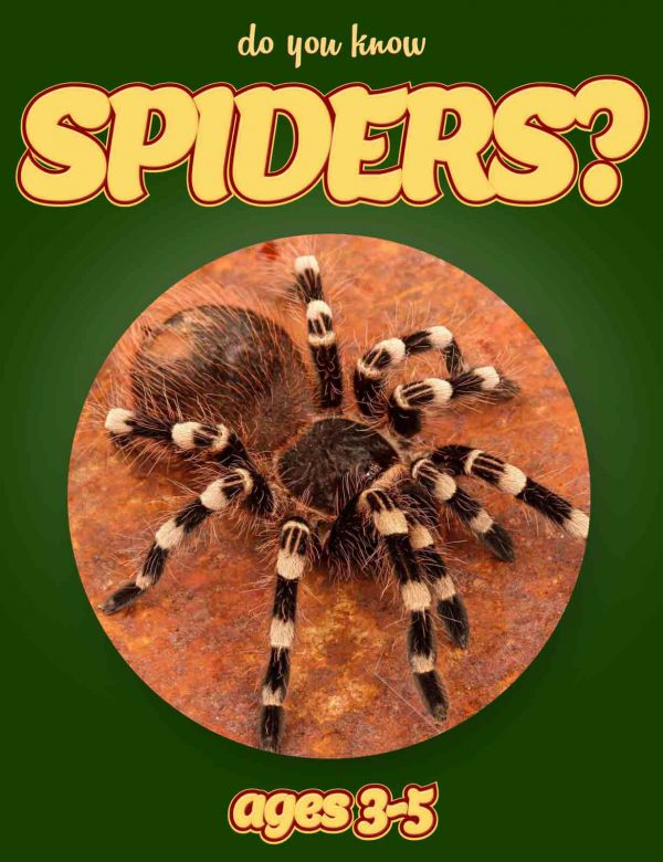 Spider Facts for Kids - Nonfiction Ages 3-5