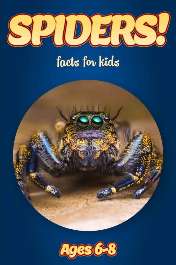 Spider Facts for Kids - Nonfiction Ages 3-6